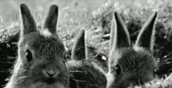 coelhos-do-muro